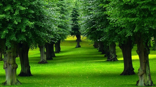 trees-picture
